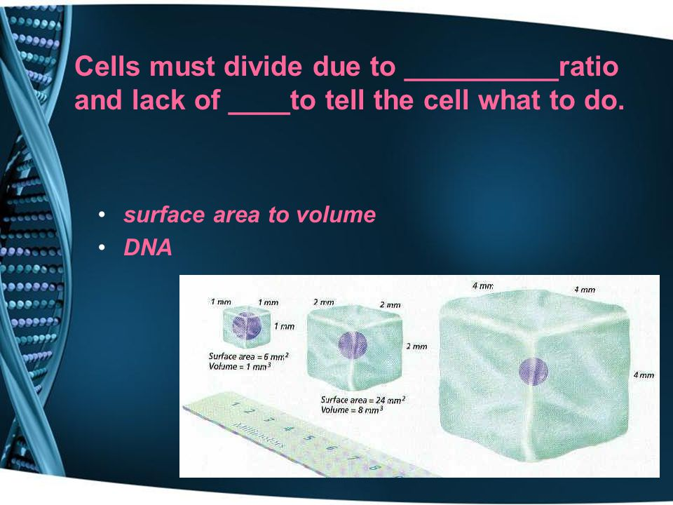 Cells must divide due to __________ratio and lack of ____to tell the cell what to do.