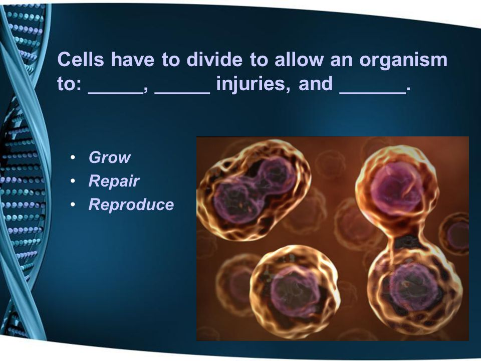 Cells have to divide to allow an organism to: _____, _____ injuries, and ______.