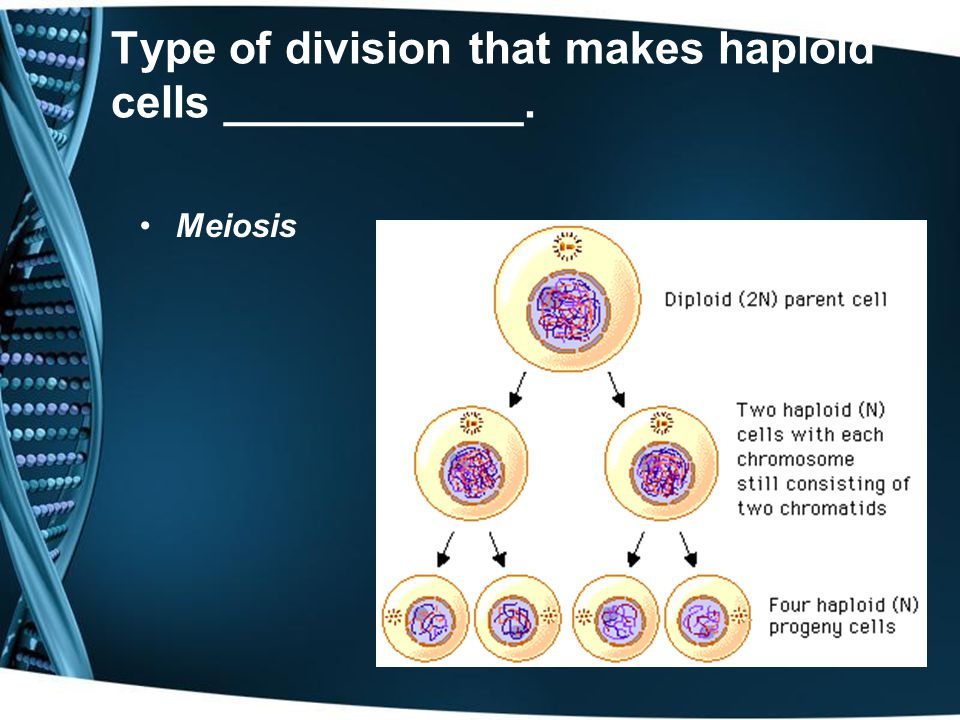 Type of division that makes haploid cells ____________.