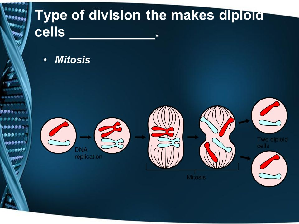 Type of division the makes diploid cells ___________.