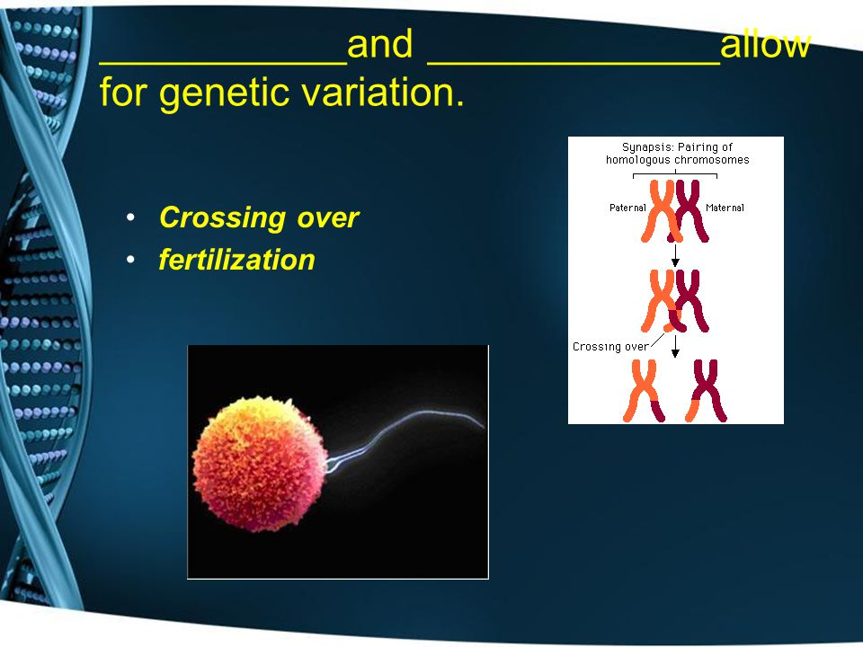 ___________and _____________allow for genetic variation.