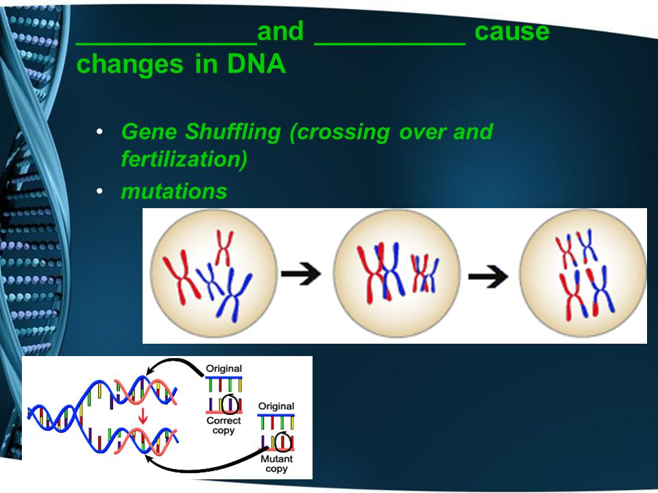 ____________and __________ cause changes in DNA