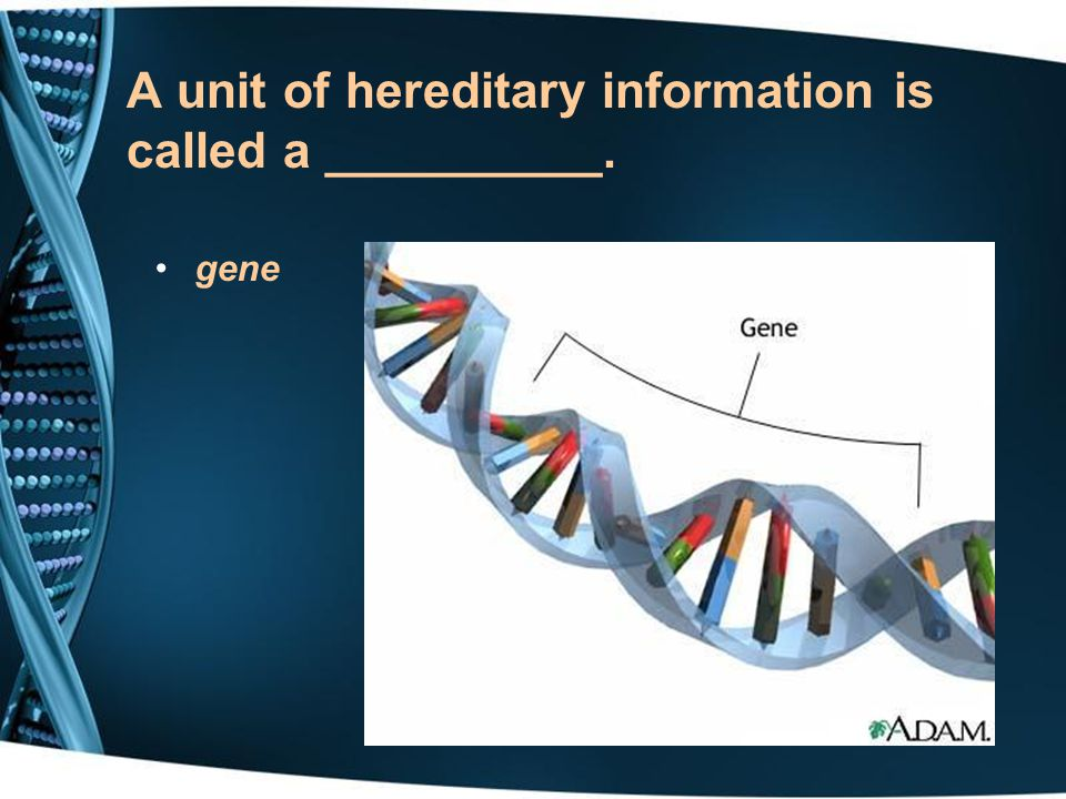 A unit of hereditary information is called a __________.