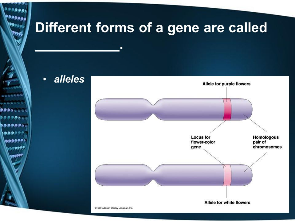 Different forms of a gene are called ___________.