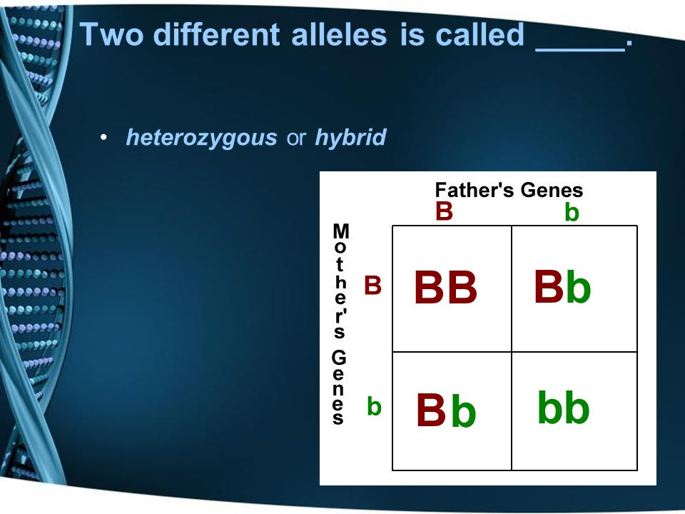 Two different alleles is called _____.