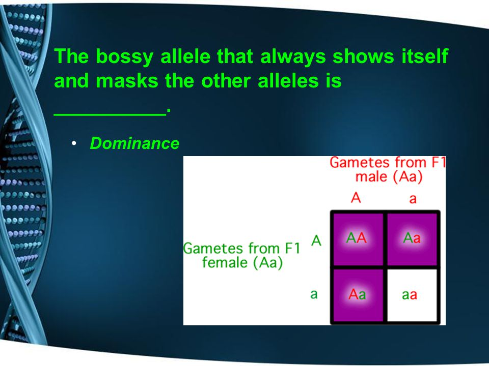 The bossy allele that always shows itself and masks the other alleles is __________.