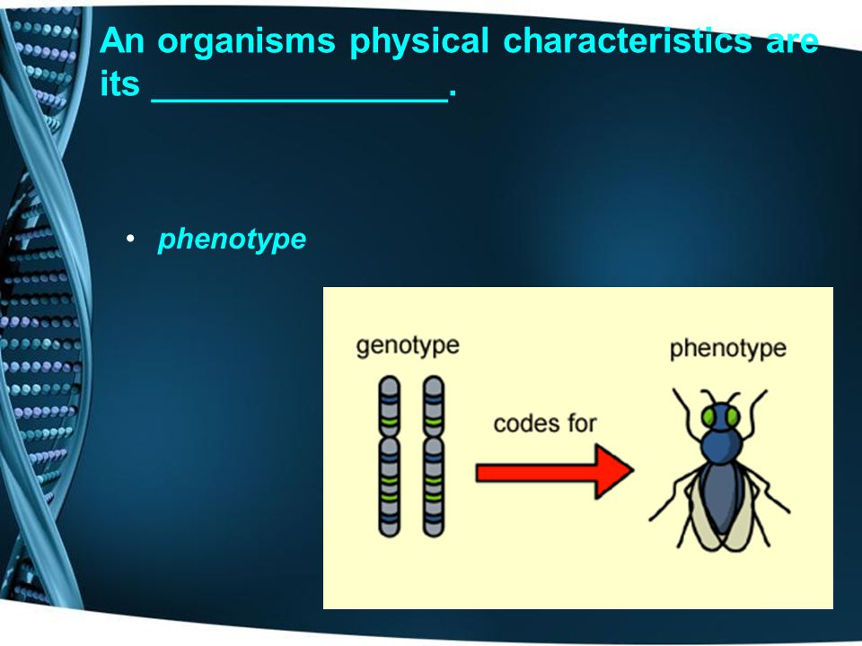 An organisms physical characteristics are its _______________.