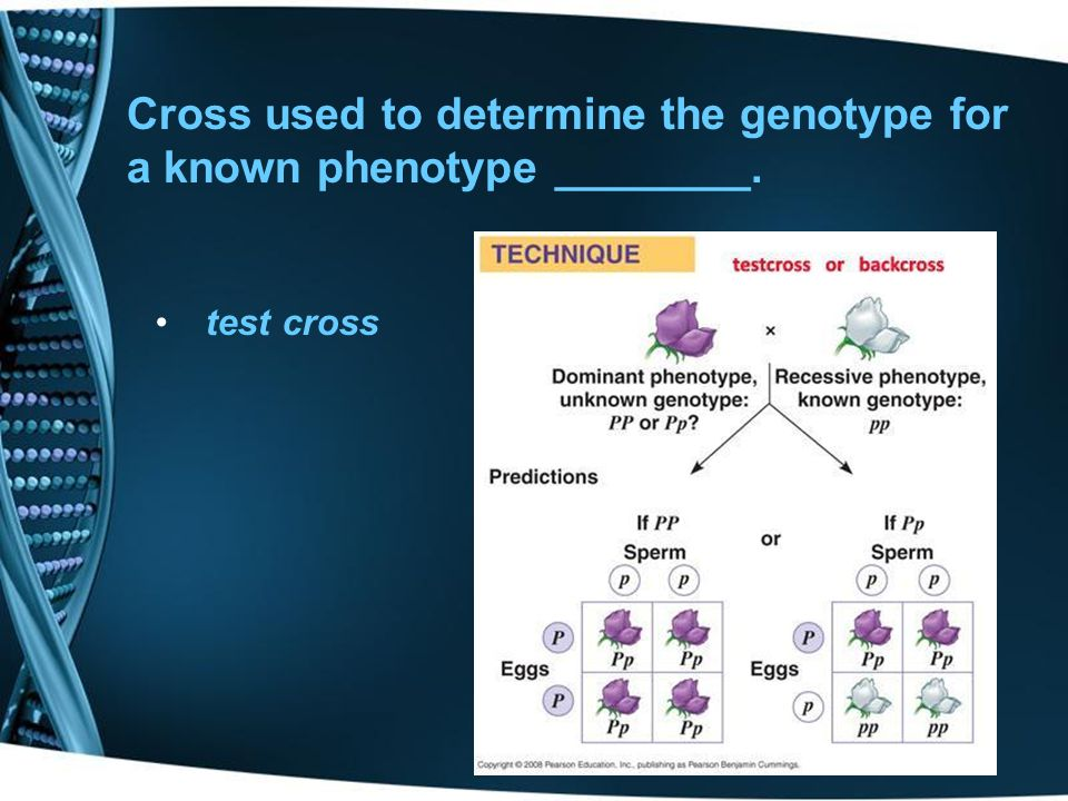 Cross used to determine the genotype for a known phenotype ________.