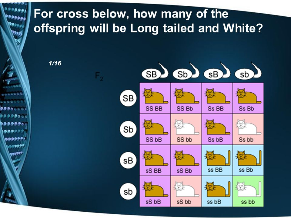 For cross below, how many of the offspring will be Long tailed and White