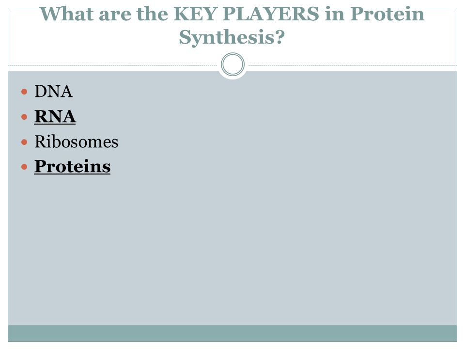 What are the KEY PLAYERS in Protein Synthesis