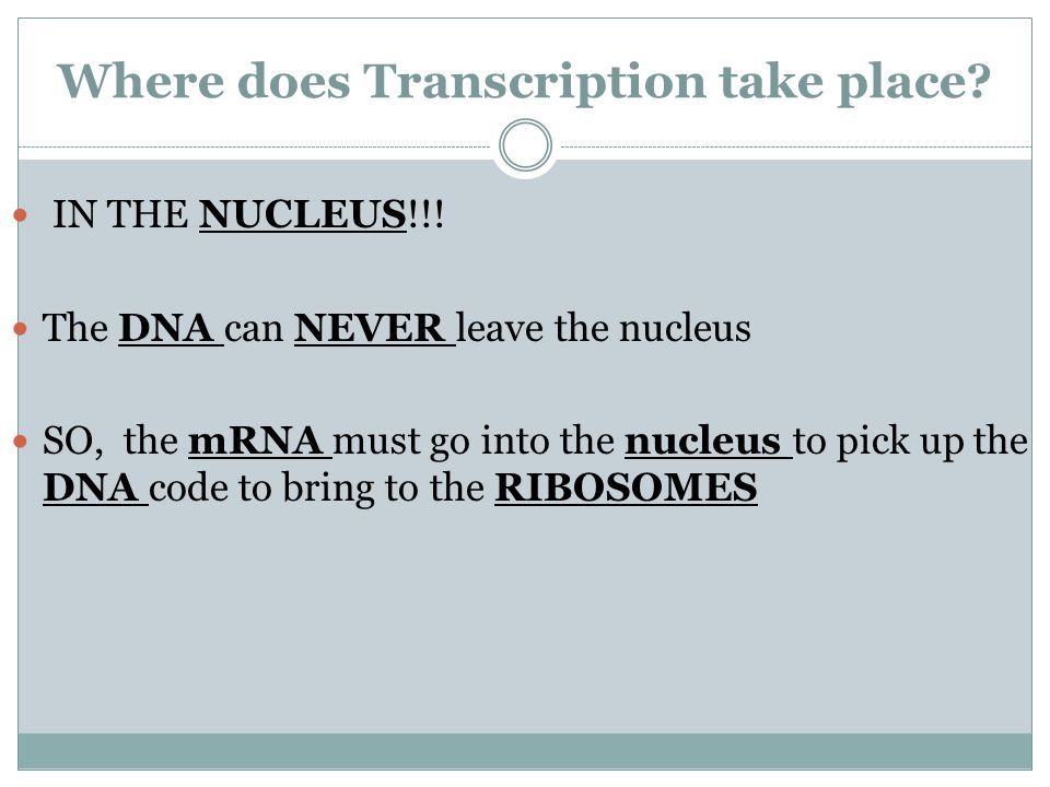Where does Transcription take place