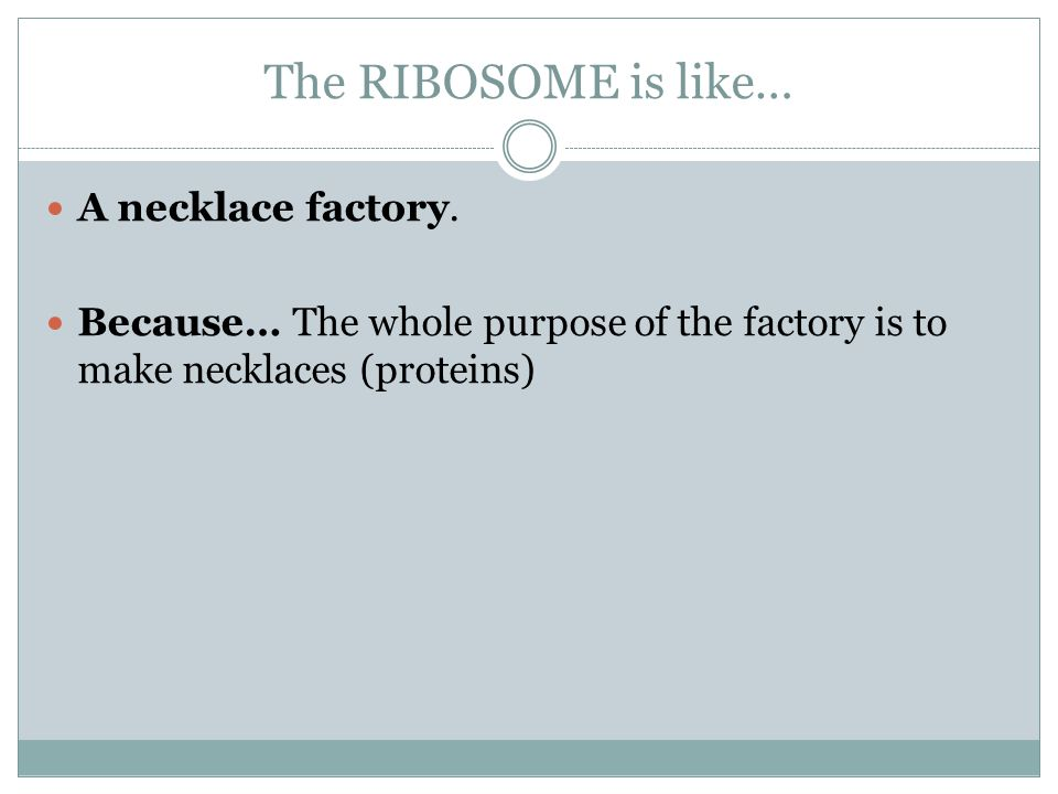 The RIBOSOME is like… A necklace factory.