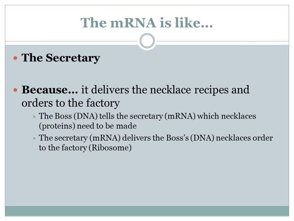The mRNA is like… The Secretary