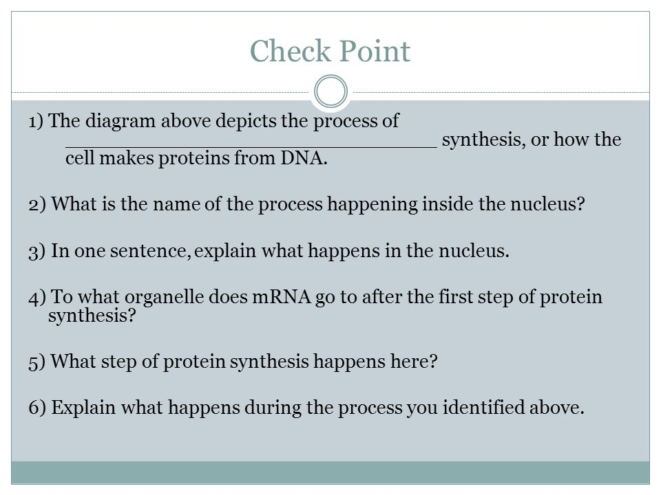 Check Point 1) The diagram above depicts the process of ______________________________ synthesis, or how the cell makes proteins from DNA.