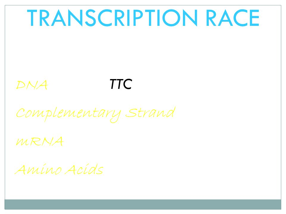 TRANSCRIPTION RACE DNA TTC CAC Complementary Strand mRNA Amino Acids