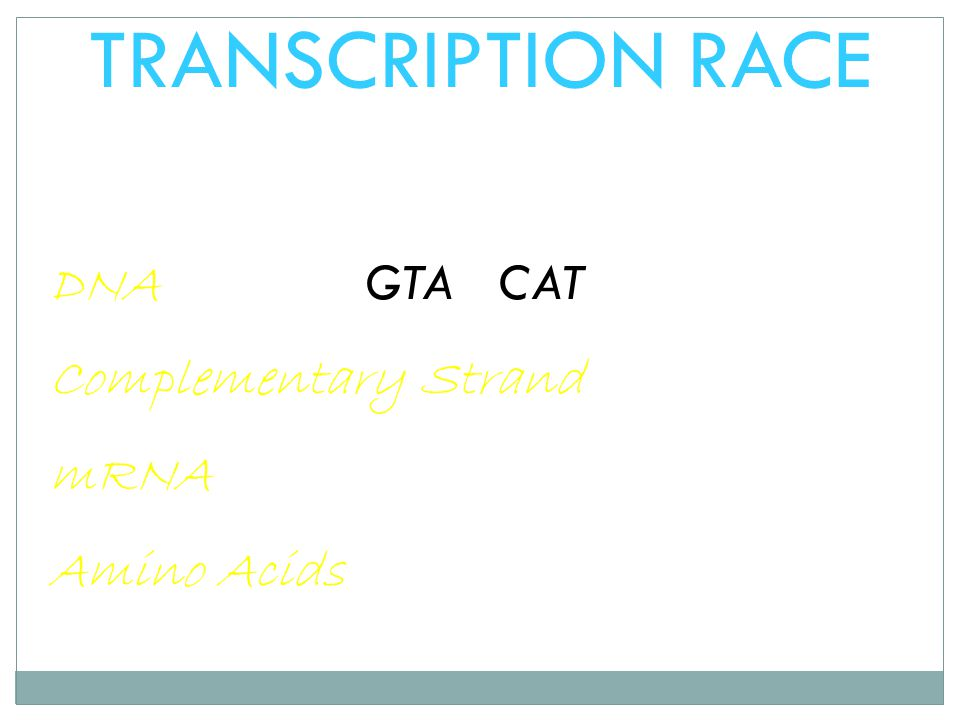 TRANSCRIPTION RACE DNA GTA CAT Complementary Strand mRNA Amino Acids