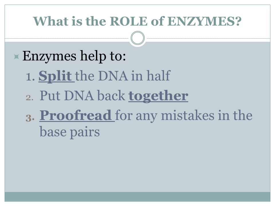 What is the ROLE of ENZYMES