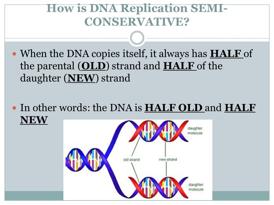 How is DNA Replication SEMI-CONSERVATIVE