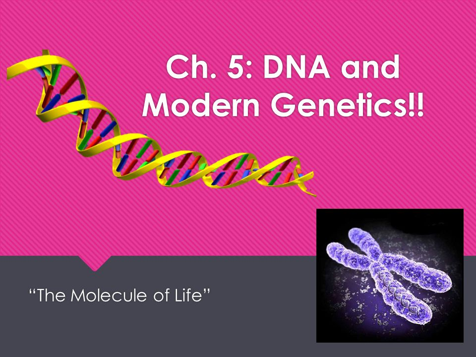 Ch. 5: DNA and Modern Genetics!!