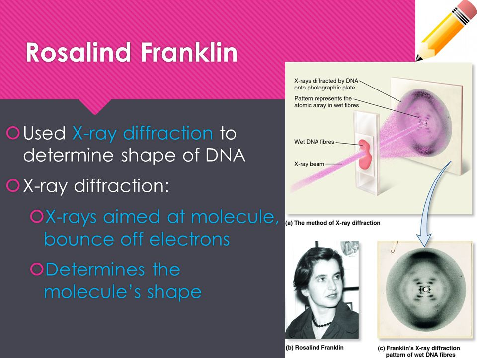 Rosalind Franklin Used X-ray diffraction to determine shape of DNA