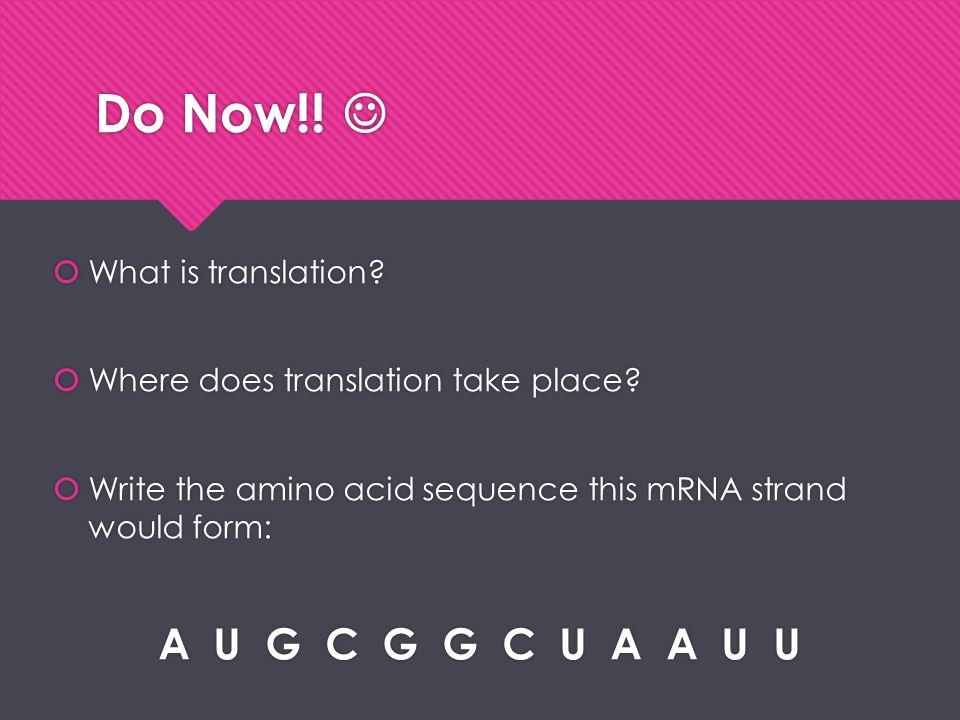 Do Now!!  A U G C G G C U A A U U What is translation