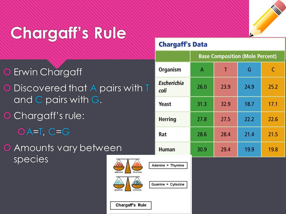 Chargaff's Rule Erwin Chargaff