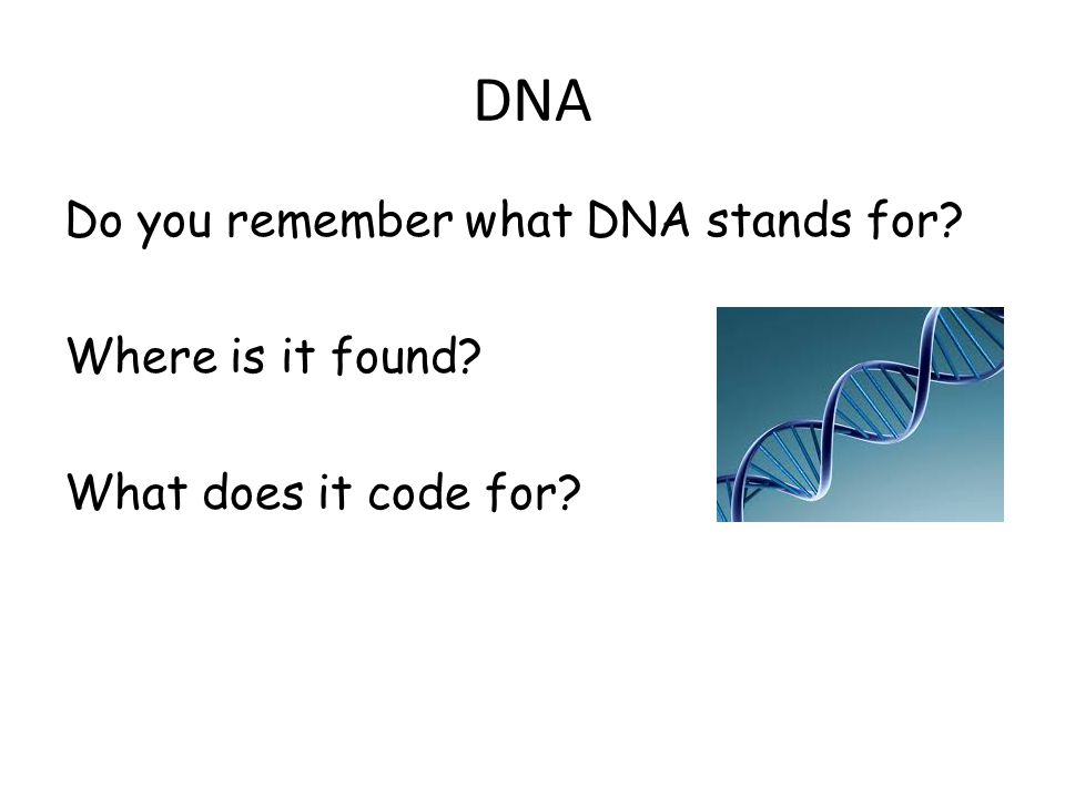 DNA Do you remember what DNA stands for Where is it found What does it code for