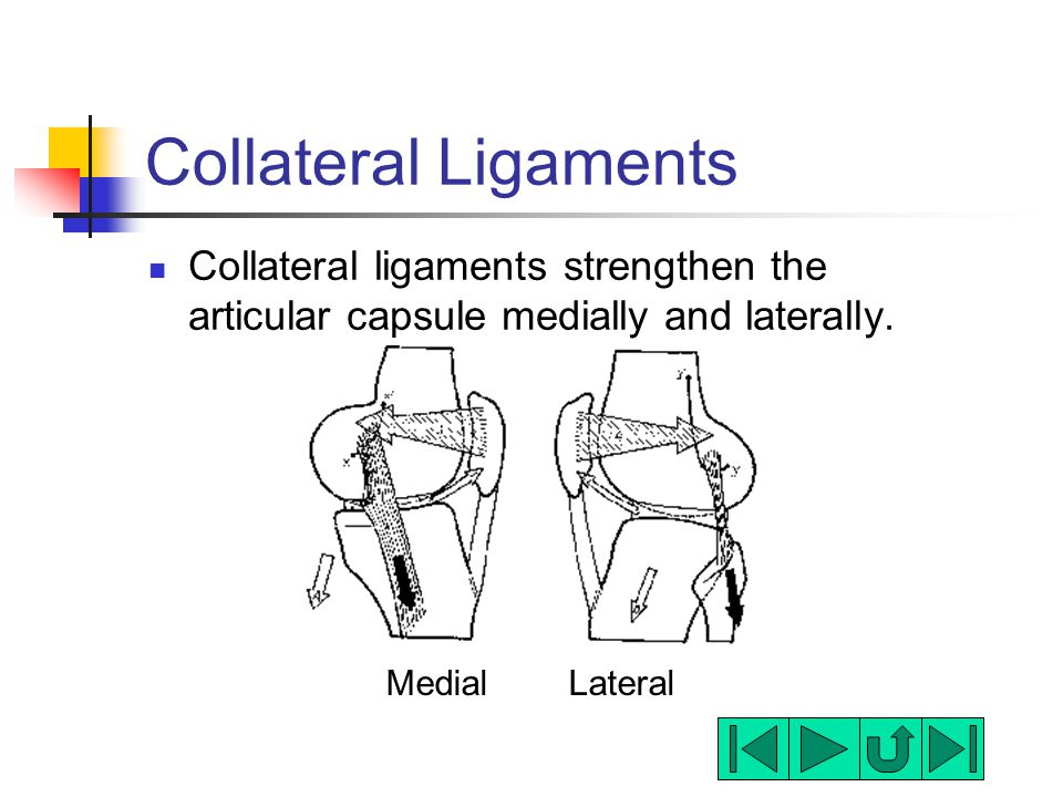 Collateral Ligaments Collateral ligaments strengthen the articular capsule medially and laterally.