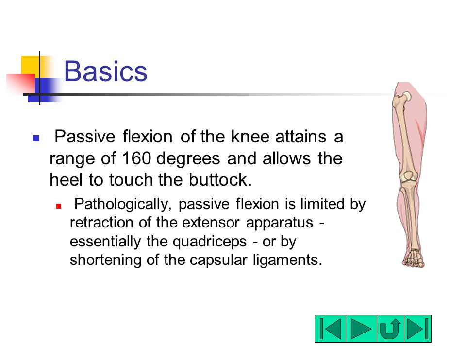 Basics Passive flexion of the knee attains a range of 160 degrees and allows the heel to touch the buttock.