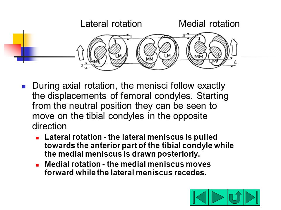 Lateral rotation Medial rotation