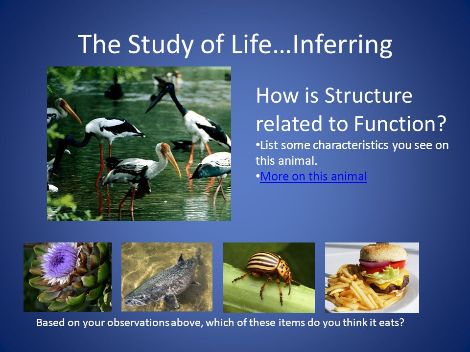 The Study of Life…Inferring