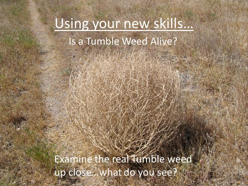Using your new skills… Is a Tumble Weed Alive
