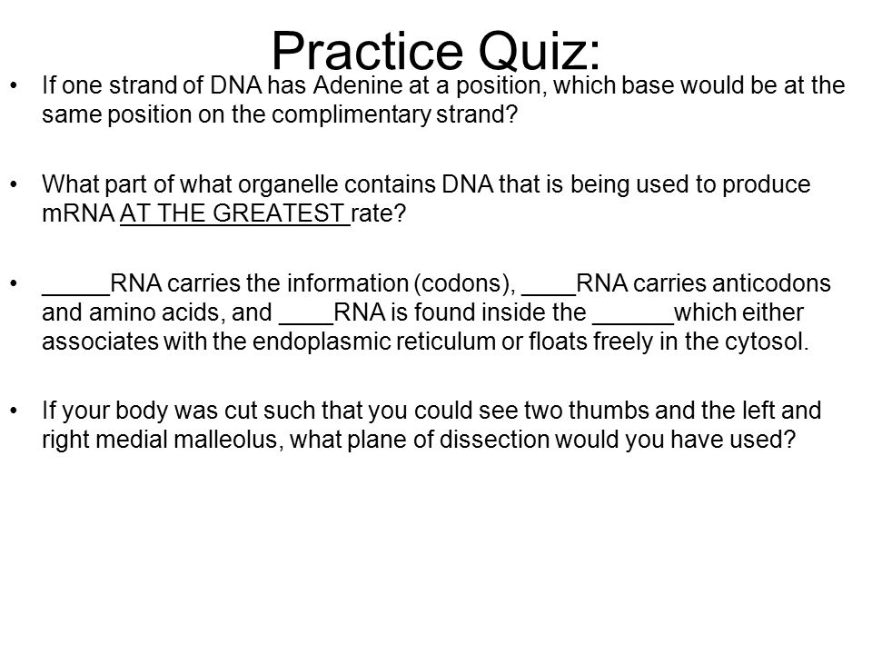Practice Quiz: If one strand of DNA has Adenine at a position, which base would be at the same position on the complimentary strand