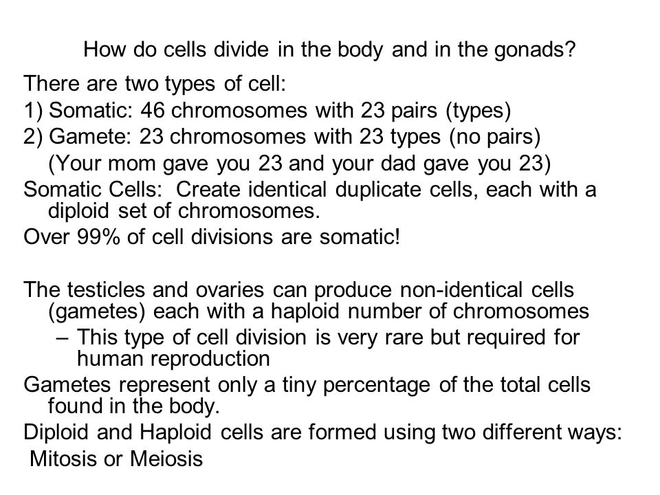 How do cells divide in the body and in the gonads