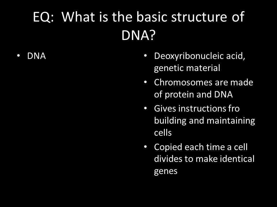 EQ: What is the basic structure of DNA