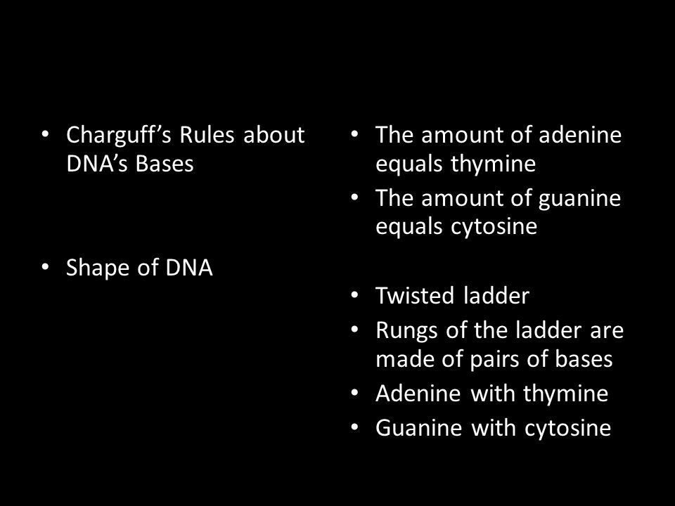 Charguff's Rules about DNA's Bases