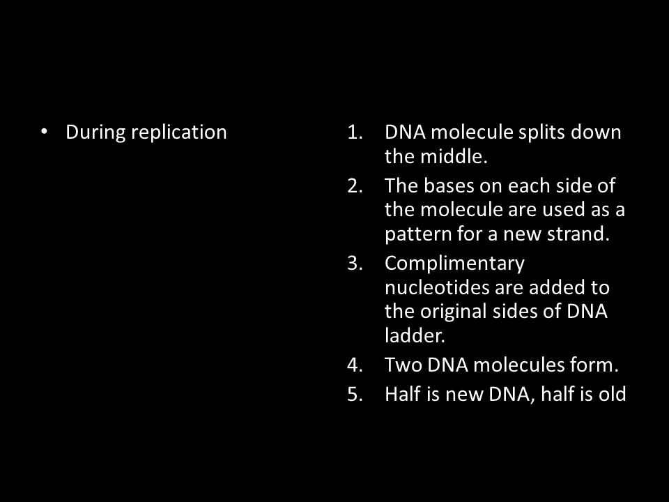 During replication DNA molecule splits down the middle. The bases on each side of the molecule are used as a pattern for a new strand.