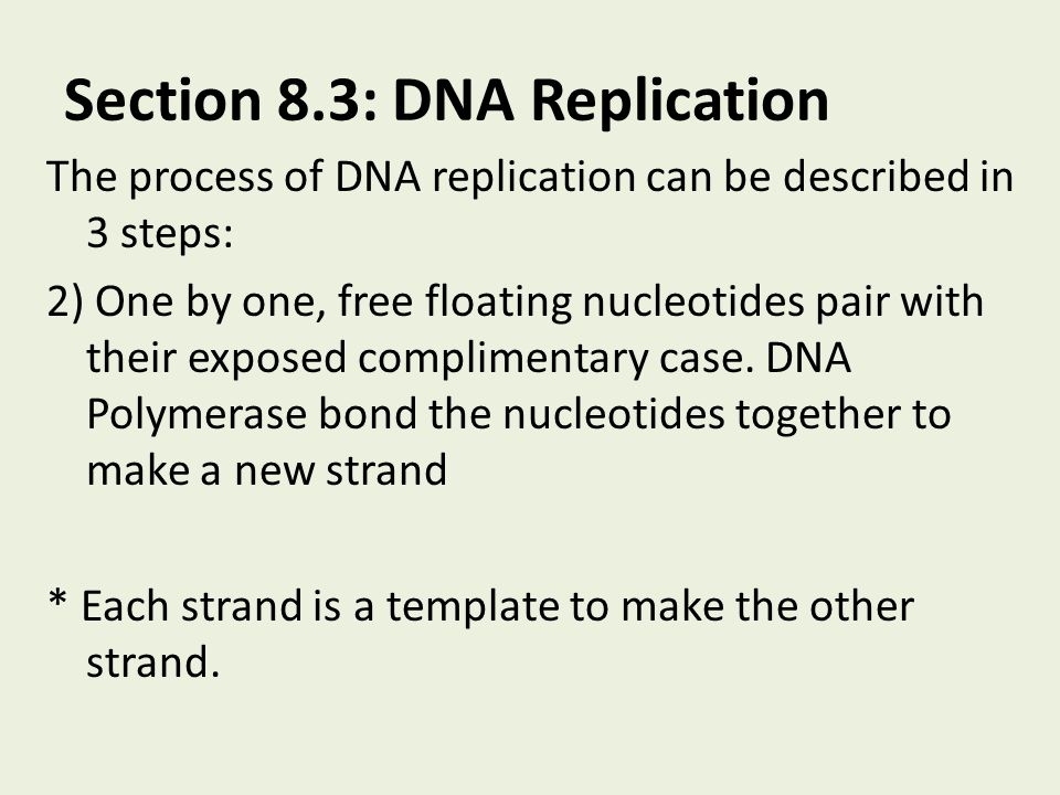 Section 8.3: DNA Replication