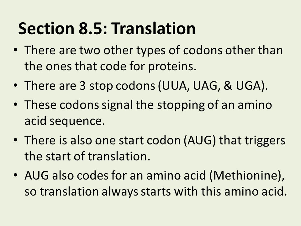 Section 8.5: Translation There are two other types of codons other than the ones that code for proteins.