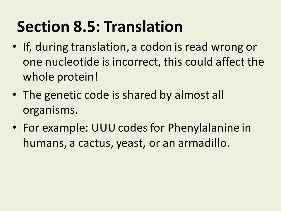 Section 8.5: Translation If, during translation, a codon is read wrong or one nucleotide is incorrect, this could affect the whole protein!