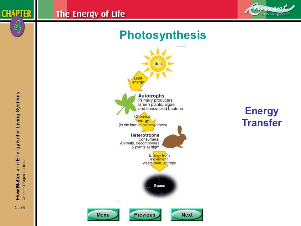 Photosynthesis Energy Transfer