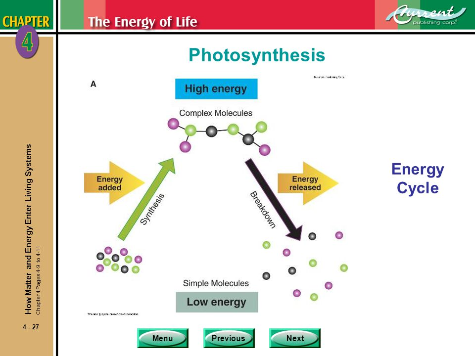 Photosynthesis Energy Cycle How Matter and Energy Enter Living Systems