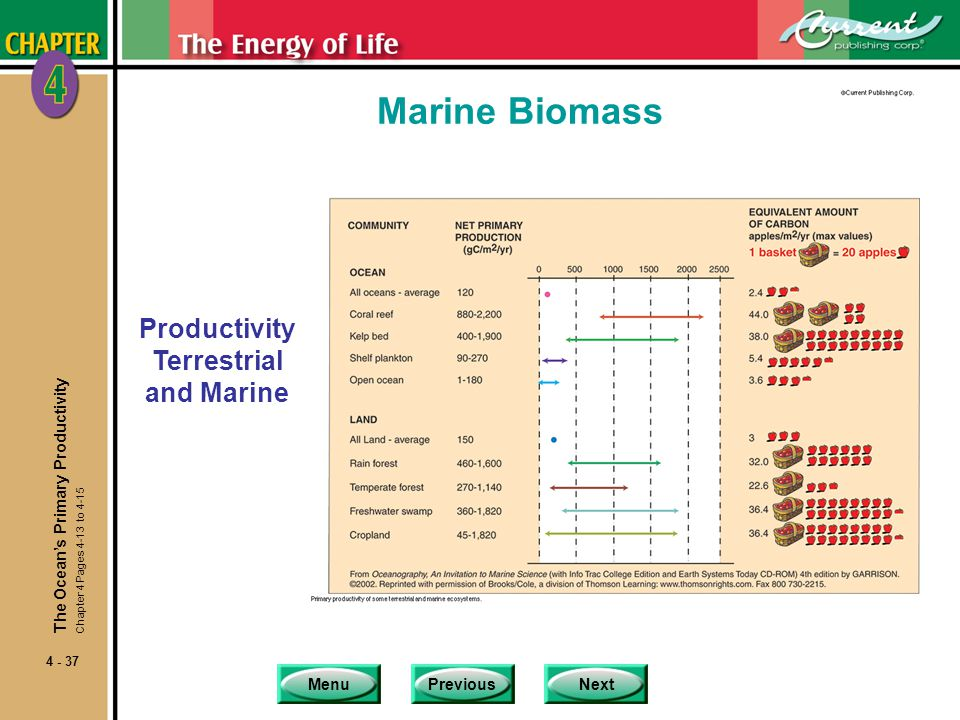 Productivity Terrestrial and Marine