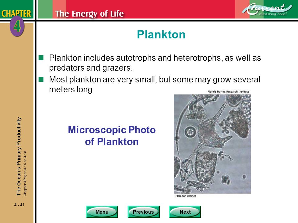Microscopic Photo of Plankton