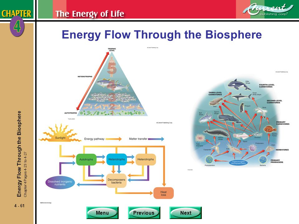 Energy Flow Through the Biosphere