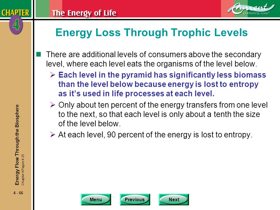 Energy Loss Through Trophic Levels