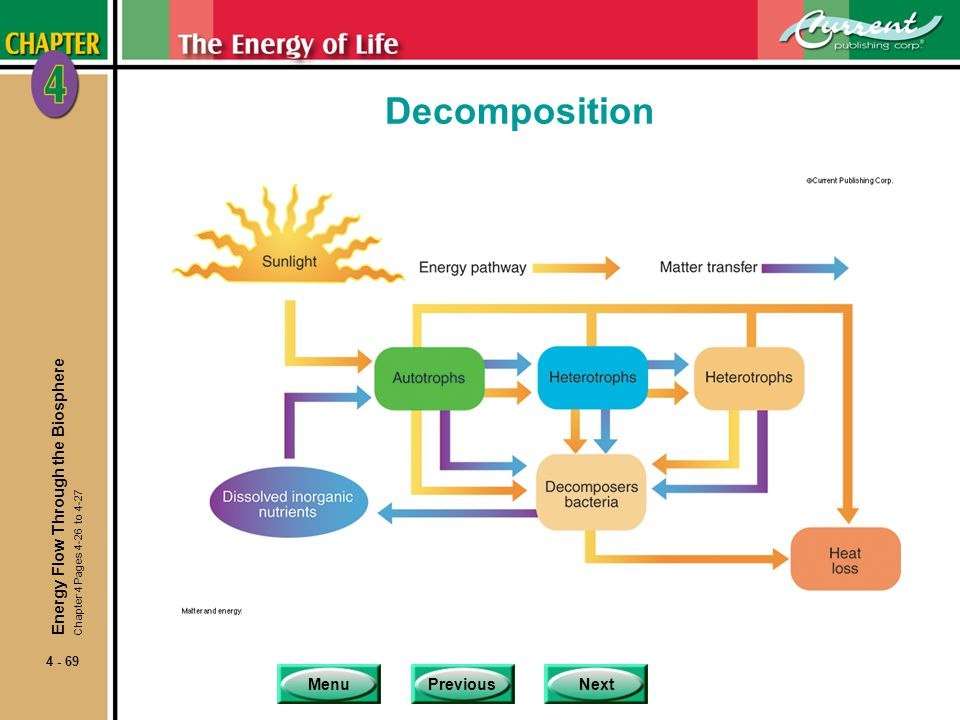 Decomposition Energy Flow Through the Biosphere