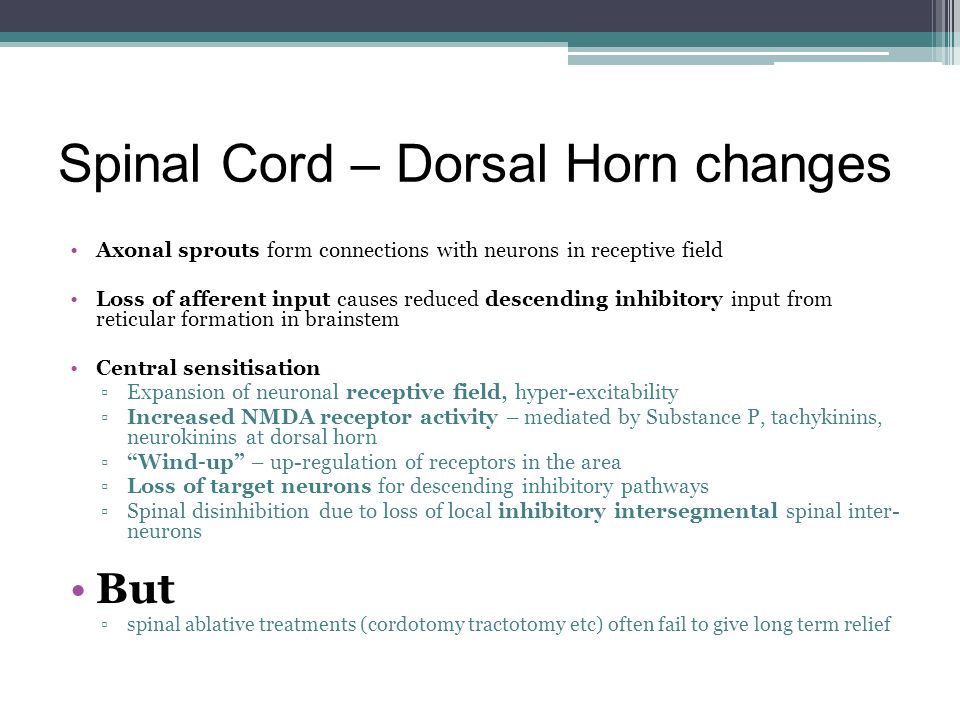 Spinal Cord – Dorsal Horn changes