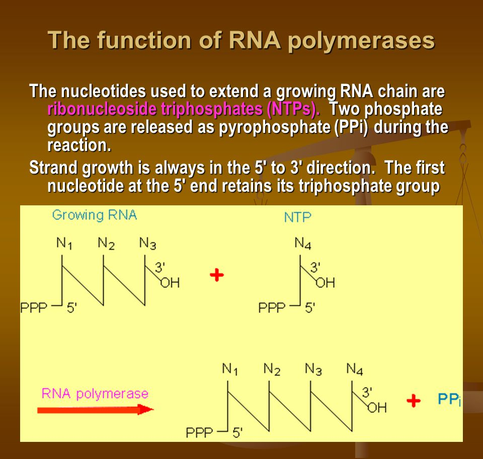 The function of RNA polymerases