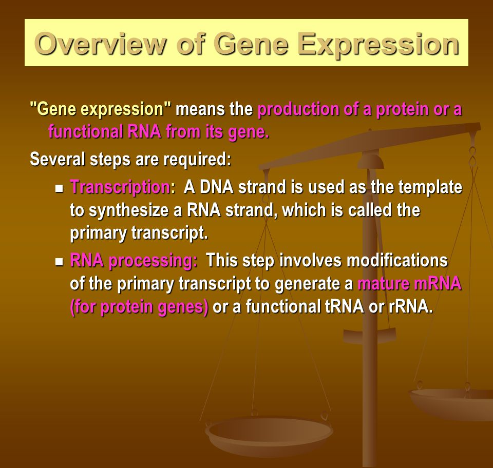 Overview of Gene Expression